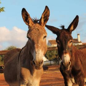 Two donkeys at El Refugio del Burrito