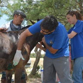 Bienestar Animal en El Rocio