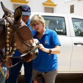 Coral Ruiz advising Rociero on protecting his mule´s nose injury caused by serrated noseband